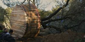 Devis Transplantation d'arbres