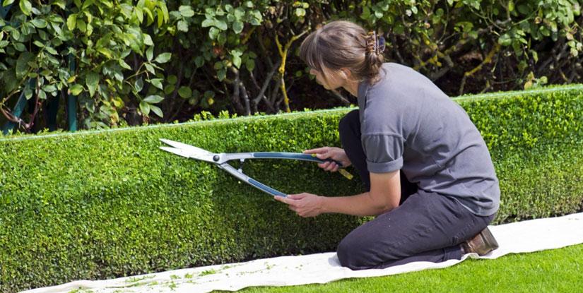 Les avantages de faire appel a un paysagiste pour l amenagement de son jardin